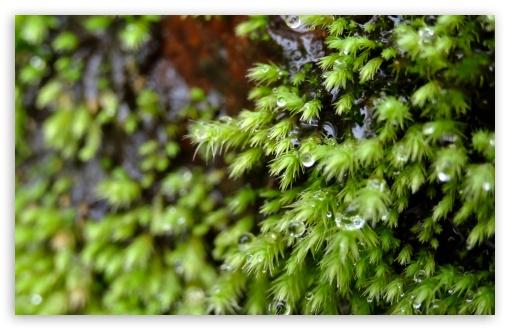 Download Sparkling Starry Moss UltraHD Wallpaper