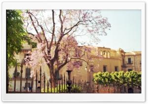 Sicily   Spring