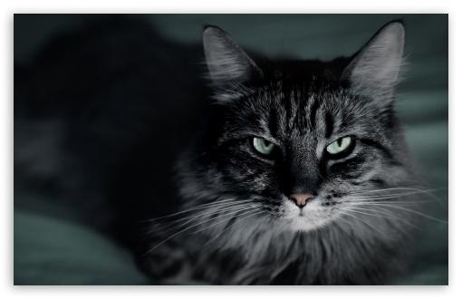 Download Not Happy Cat UltraHD Wallpaper