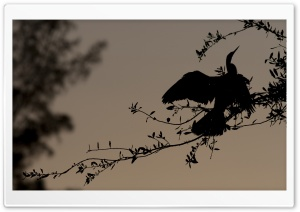 Bird Silhouette On Branch