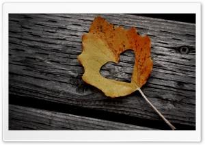 Heart Leaf Autumn