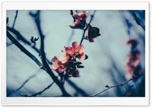 Spring Blossom, Gloomy Day