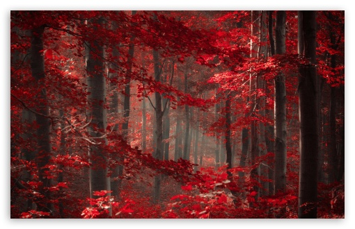 Download Enchanted Forest UltraHD Wallpaper