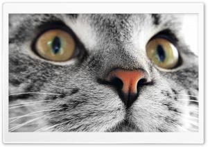 Kitty Cat Close Up