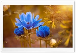 Blue Flowers, Golden Sunshine