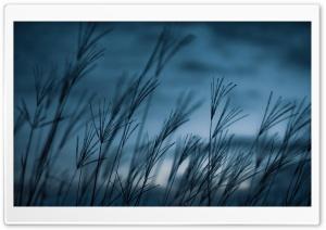 Grass, Dusk