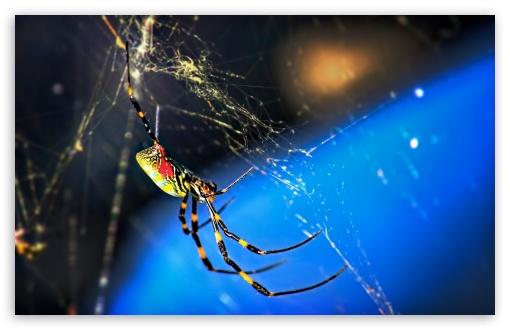Download Nephila Clavata Spider UltraHD Wallpaper