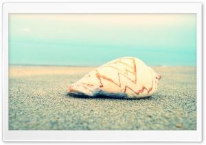 Sand N Shell