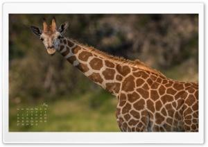 Giraffe May Calendar