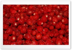 Small Strawberries