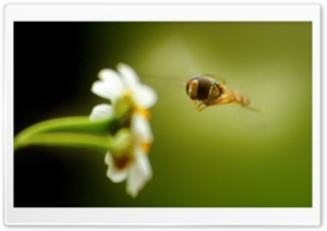 Flying Insect 1