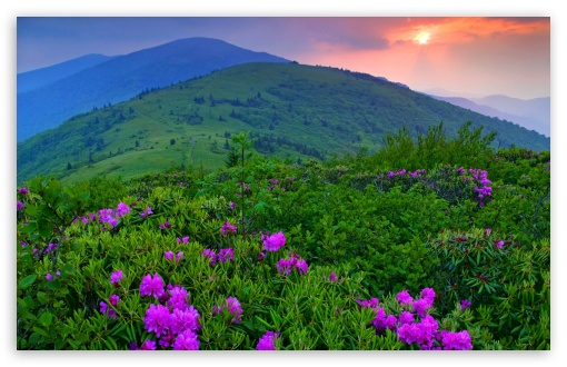 Download Purple Mountain Flowers UltraHD Wallpaper