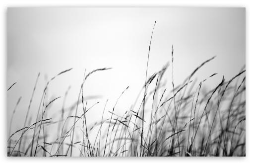 Download Field Grass UltraHD Wallpaper