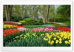 Spring Gardens in Holland,...