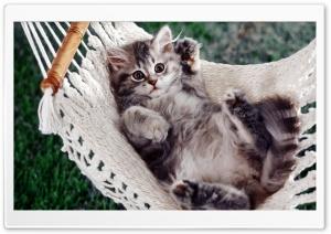 Kitten Sitting In A Hammock