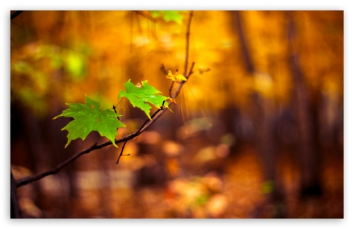 Download Green Leaves Autumn UltraHD Wallpaper