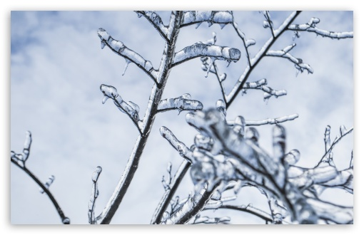 Download Branches Engulfed In Ice UltraHD Wallpaper