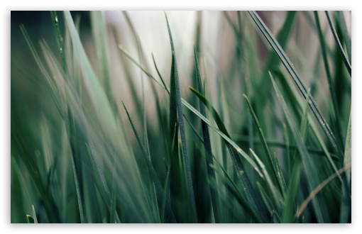 Download Dark Green Grass UltraHD Wallpaper