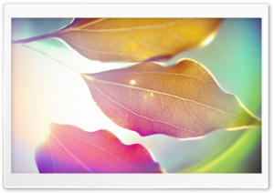 Colored Leaves 9