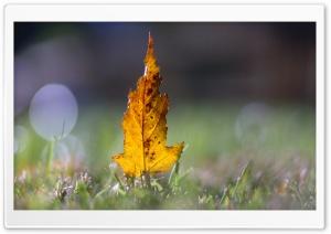 Yellow Leaf Bokeh