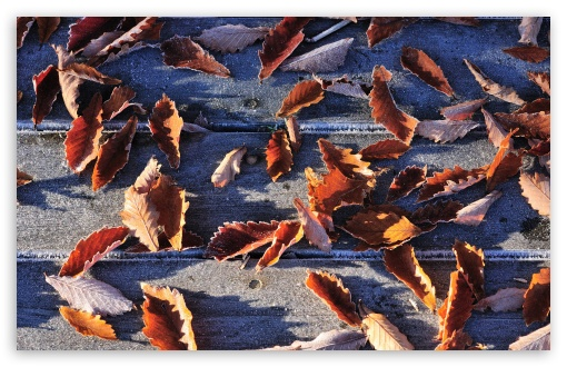 Download Frozen Autumn Leaves UltraHD Wallpaper