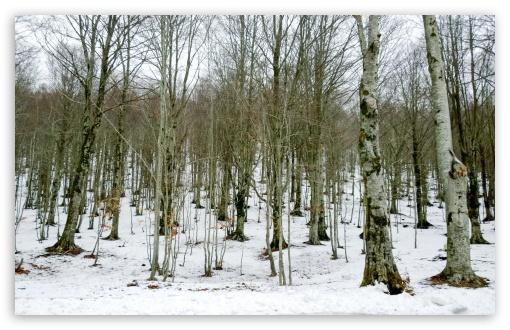 Download Winter Forest UltraHD Wallpaper