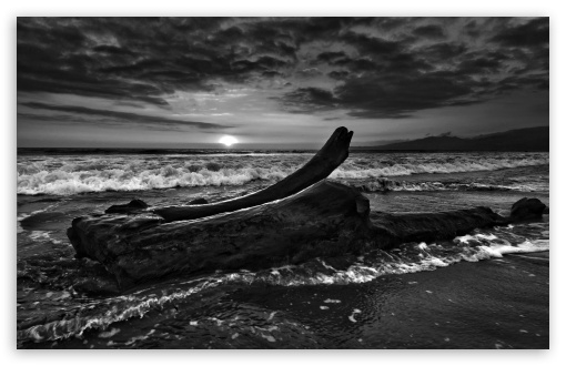 Download Driftwood Beach Monochrome UltraHD Wallpaper