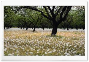 Beautiful Dandelion Field