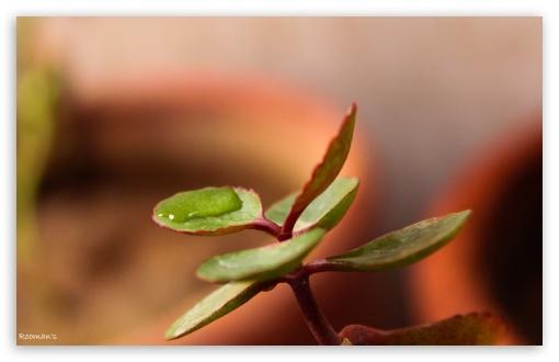 Download Leaf Bearing Water UltraHD Wallpaper