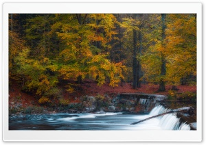 Autumn, Fall, Forest, River,...