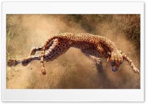 Wild Cheetah Animal