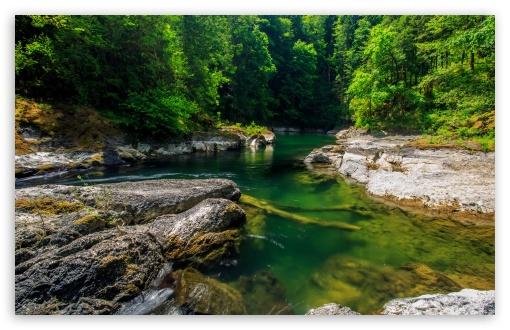 Download Mountain Forest Stream UltraHD Wallpaper