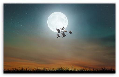 Download Nocturnal Migration of Birds, Full Moon UltraHD Wallpaper