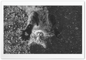 Kitty Black and White