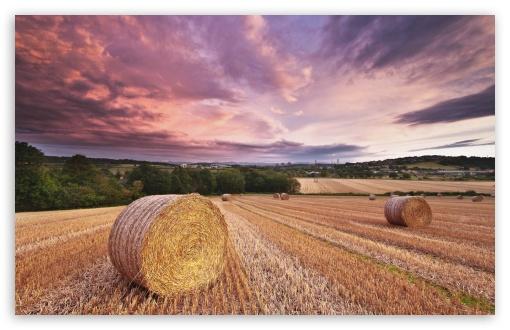 Download Magical Harvest UltraHD Wallpaper