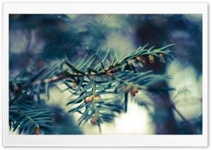 Fir Tree Twig